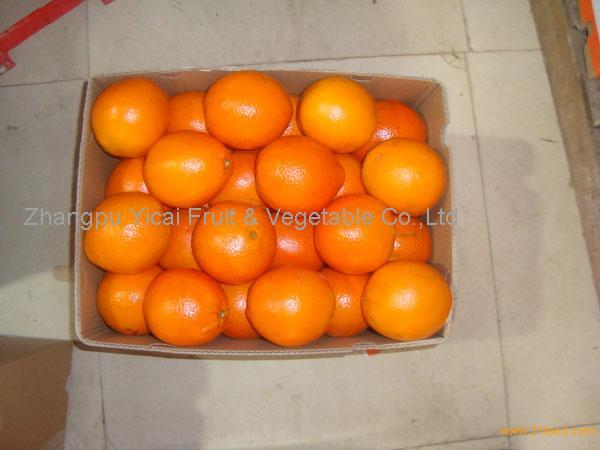 Navel orange14