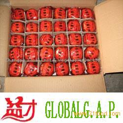 Chinese mandarin orange001