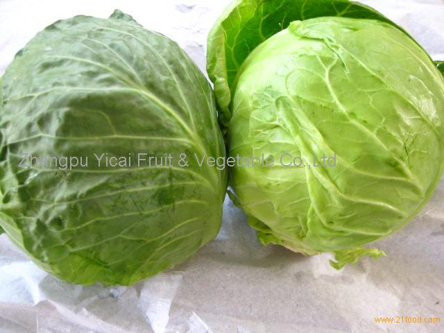 Chinese round cabbage003