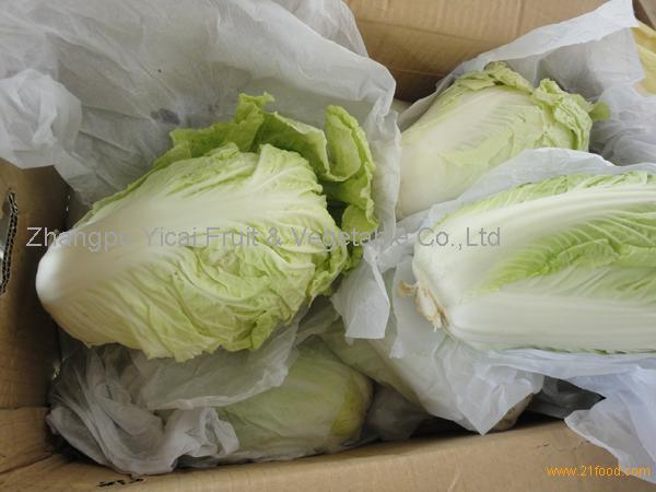 cabbage002
