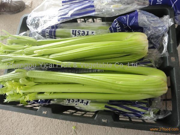 Fresh celery001