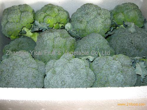 Fresh broccoli001