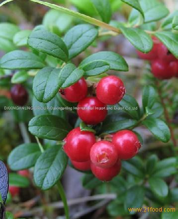 Lingonberry Red