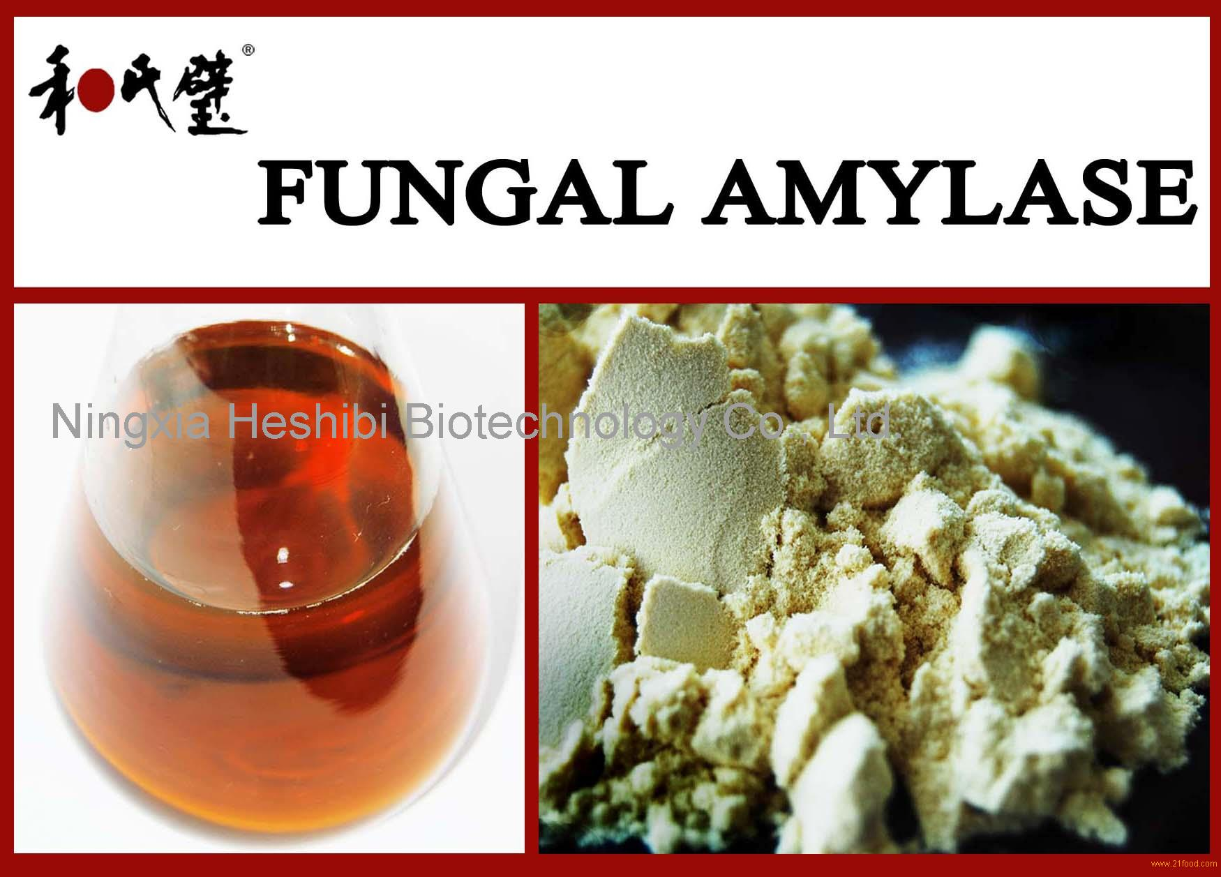 fungal amylase The present review was focused on fungal amylase and this review assesses the following topics: classification of amylase, fungal amylase, biochemical properties of amylases, fermentation studies on fungal amylase production and uses of amylases.