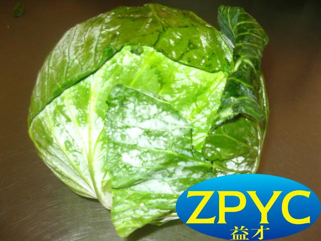 beijing cabbage 2015