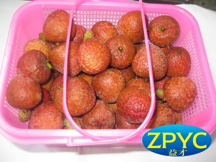 fresh chinese Lychee