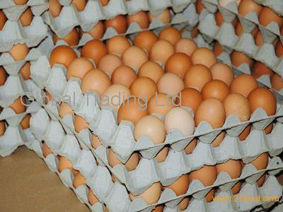 Chicken Fresh eggs, Hatching eggs, chicks and parents
