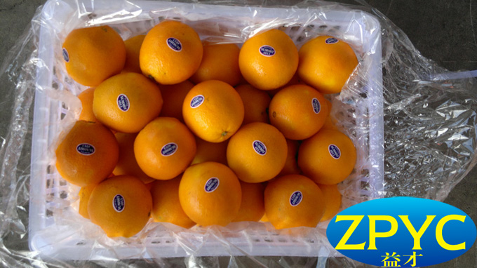 Ganzhou navel orange
