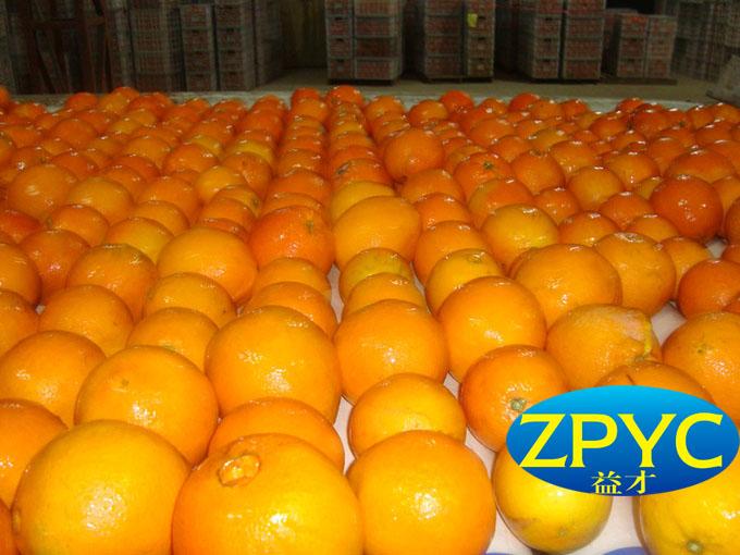 Newhall navel orange