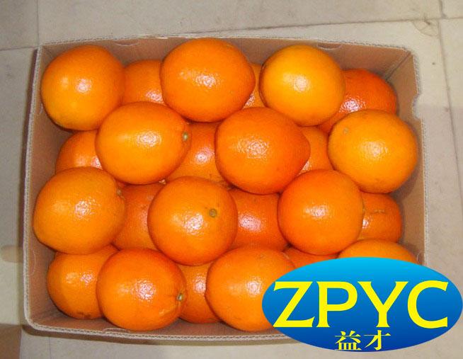 navel orange fruits