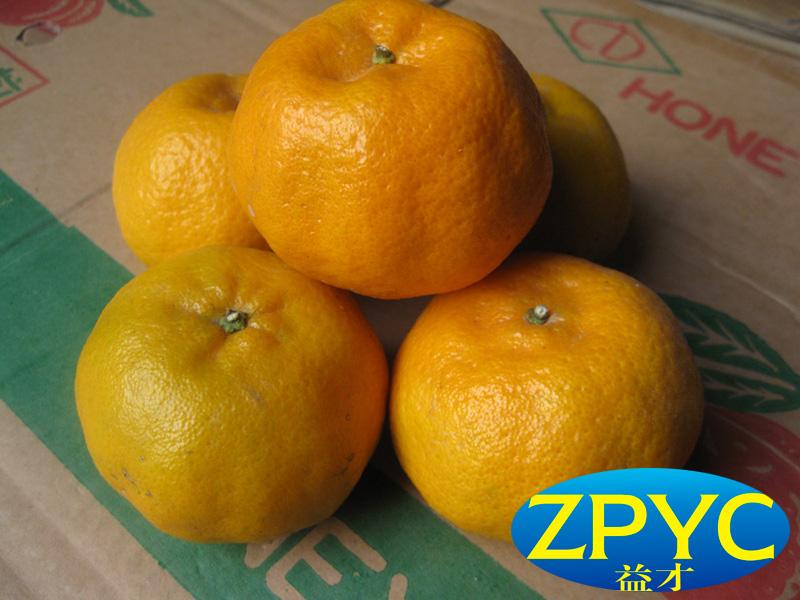 2015 chinese mandarin orange
