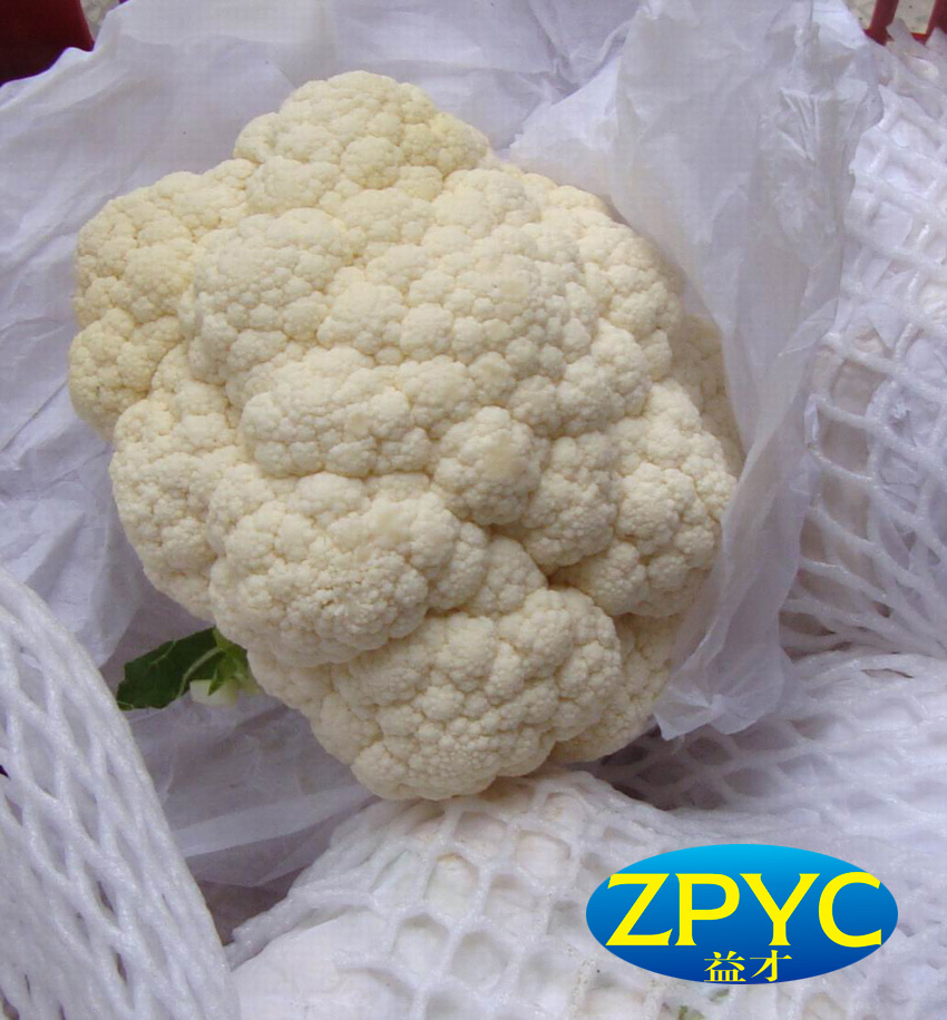Fresh cauliflower(Chinese)