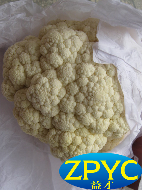 Fresh white cauliflower