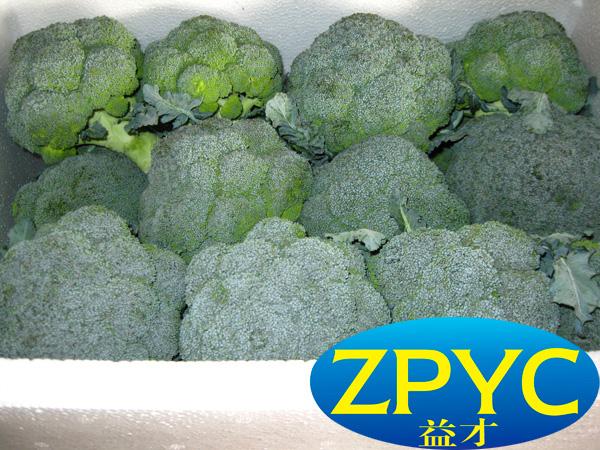 Broccoli (Chinese)