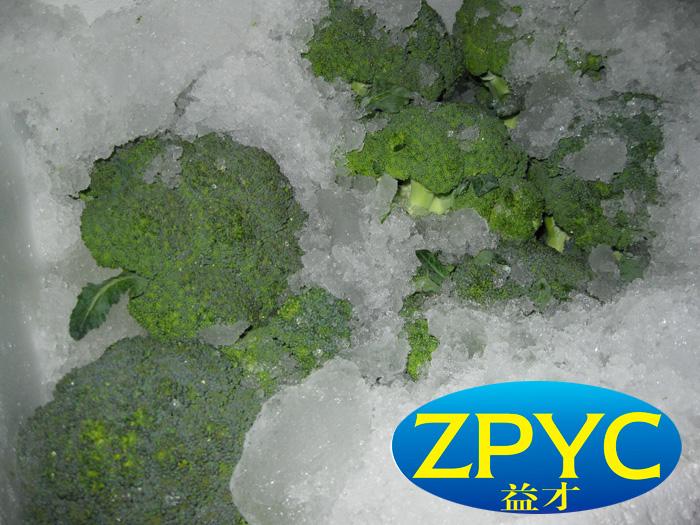 Fresh broccoli with ice