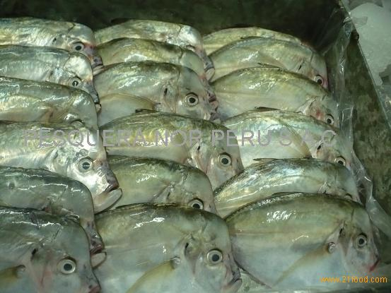Frozen Pacific Moonfish W/R : (Selene Peruviana)