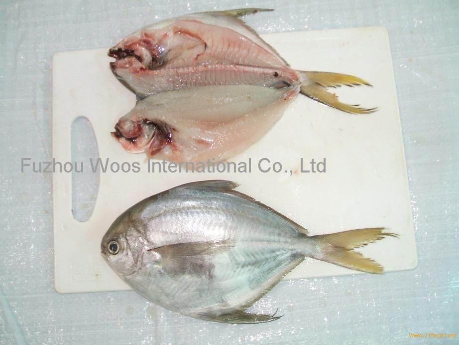 frozen wr butter fish(white pomfret)
