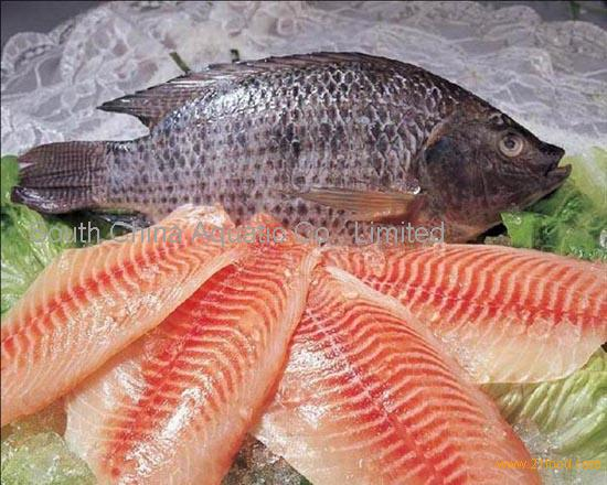 Frozen tilapia fish products china frozen tilapia fish for What is tilapia fish