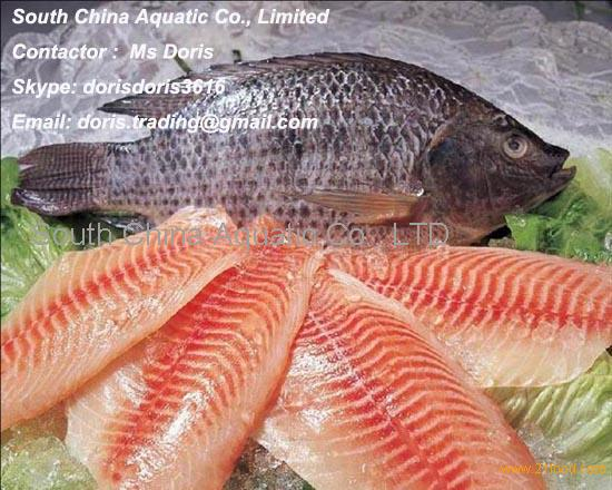 Frozen Black Tilapia Whole Round and Head-on