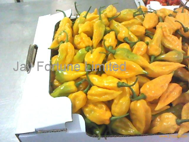 yellow habanero chilli