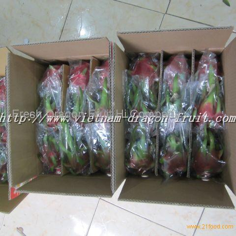 dragon fruit farm and manufacturing of