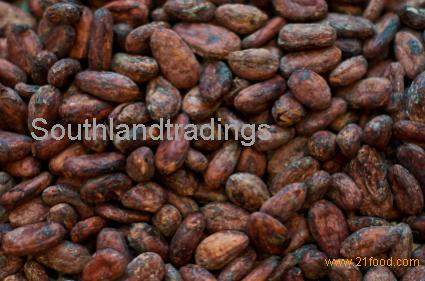 cocoa beans seed,powder, products,South Africa cocoa beans seed,powder, supplier425 x 281 jpeg 28kB
