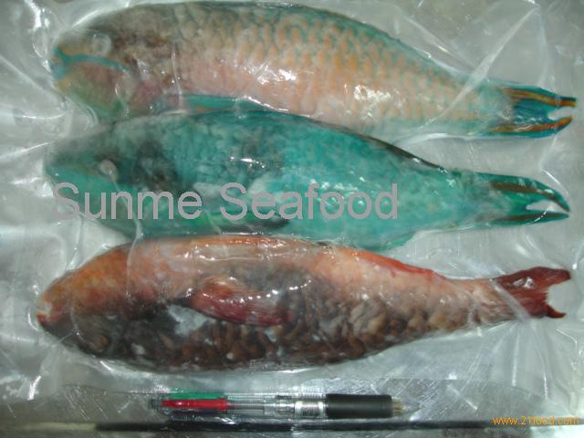 Parrot Fish For Sale Parrot Fish wg