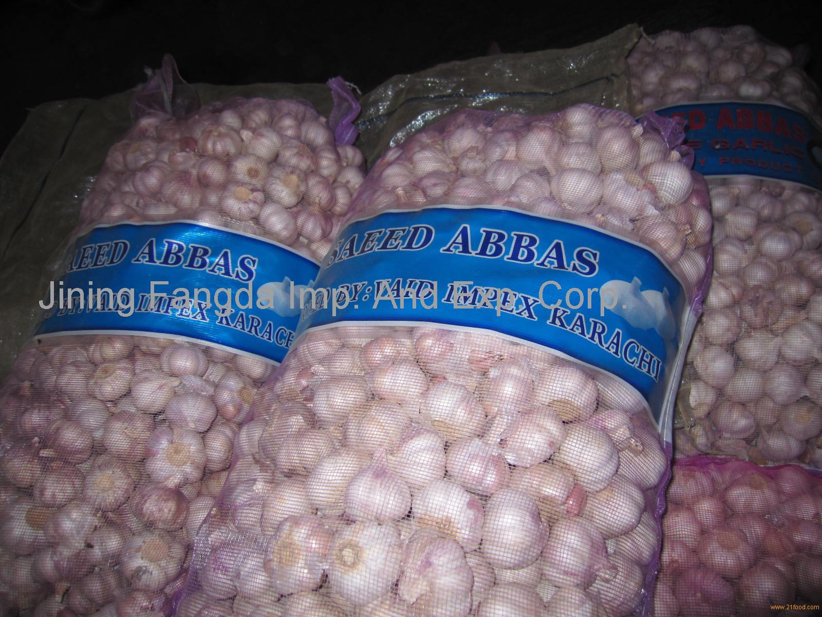 fresh garlic for export