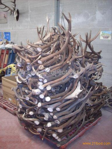 Deer antlers cervus elaphus products spain deer antlers for Corna cervo