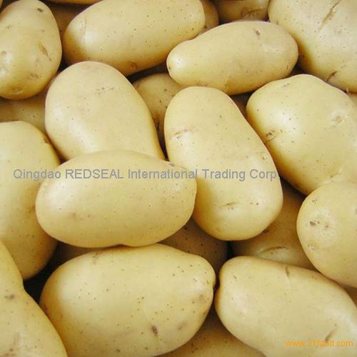 2012 Fresh Holland potato