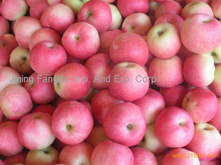 fresh gala apples for exporting
