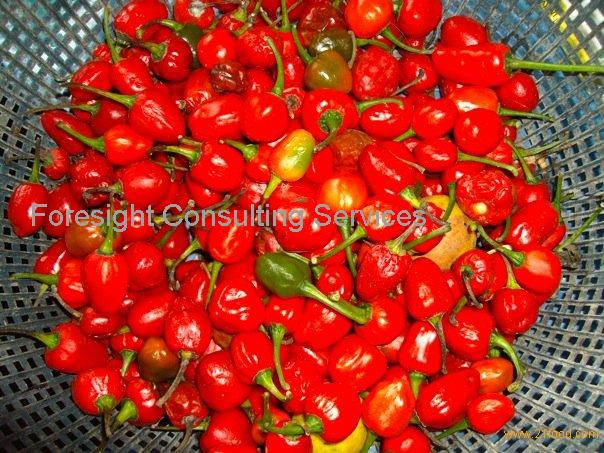 ... chili peppers hot chili peppers stock images pickled chili peppers a