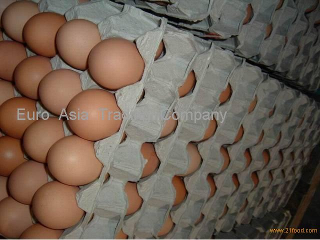 Fertilized Broiler Chicken Eggs