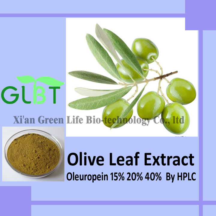 Home For Buyers Food Ingredients Plant Extracts Olive Leaf Extract