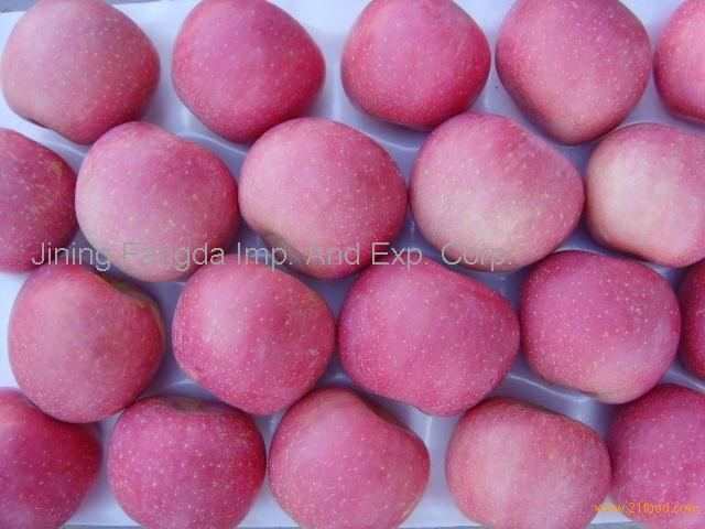 chinese new fresh apple