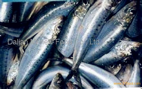 Very fresh sardine from china