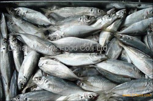 Good delicious horse mackerel from china supplier