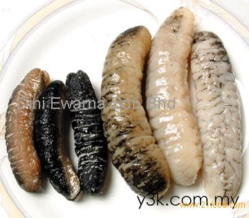 Dry And Fresh Sea Cucumber Products Malaysia Dry And Fresh Sea Cucumber Supplier