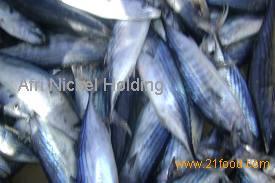 Skipjack Tuna , Yellowfin Tuna, Tilapia