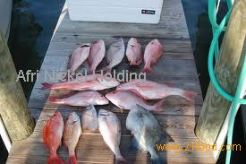 Red Snapper , King Snaper , Scarlet Red Snapper