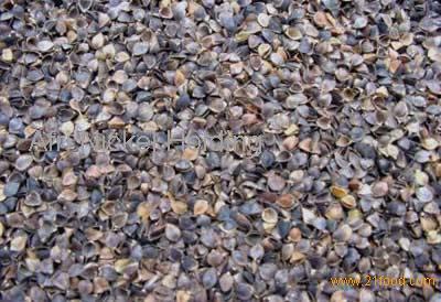 buckwheat hull