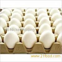 White Chicken Eggs and Brown Chicken Eggs