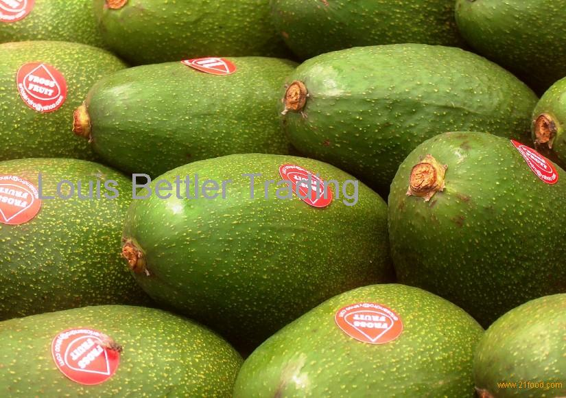 SOUTH AFRICA BUTTER AVOCADO products,South Africa SOUTH AFRICA BUTTER AVOCADO supplier