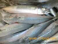 freh frozen alaska pollock fish