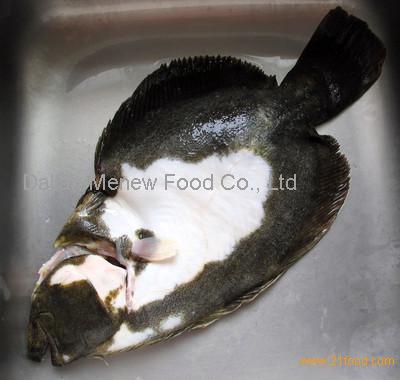 High trophic flatfish made in china