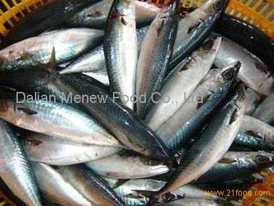 Wholesale mackerel fish from china supplier