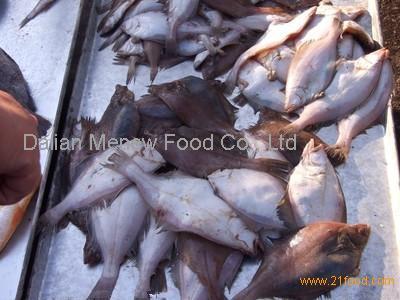 Wholesale flatfish with fresh frozen products