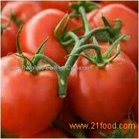 fresh quality tomatoes