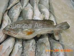 Frozen pacific cod fillets