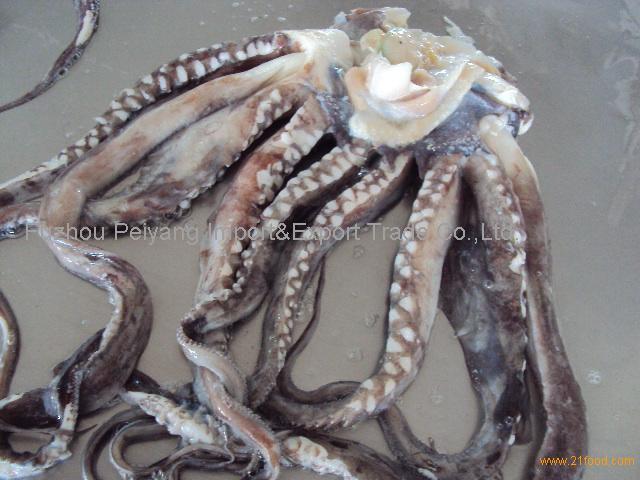 Frozen Giant Squid Tentacle